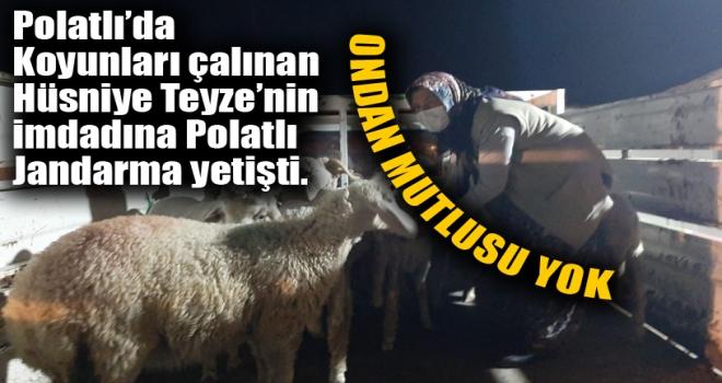 Polatlı Jandarma Hüsniye Teyze'nin Çalınan Koyunlarını Teslim Etti