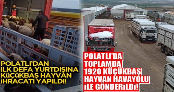Tarım ve Hayvancılığın Başkent'i Polatlı'dan yurtdışına ilk defahavayoluyla 1920 küçükbaş hayvan ihracatı yapıldı