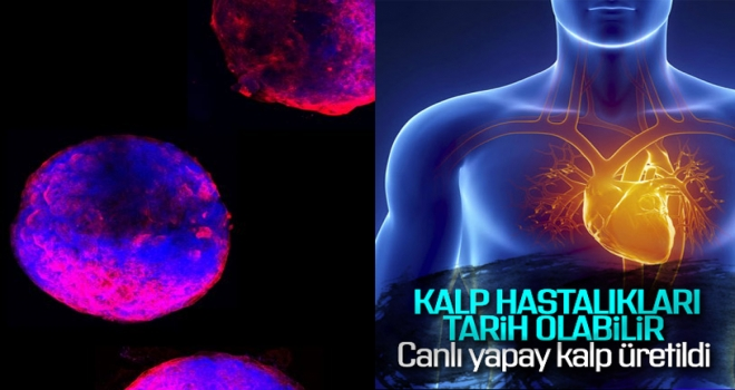 Kalp Hastalıkları Tarih Olabilir... Canlı Yapay Kalp Üretildi!