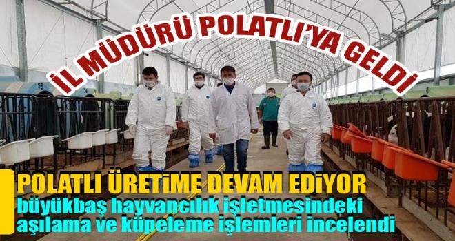 Polatlı'da büyükbaş hayvancılık işletmesindeki aşılama ve küpeleme işlemleri incelendi