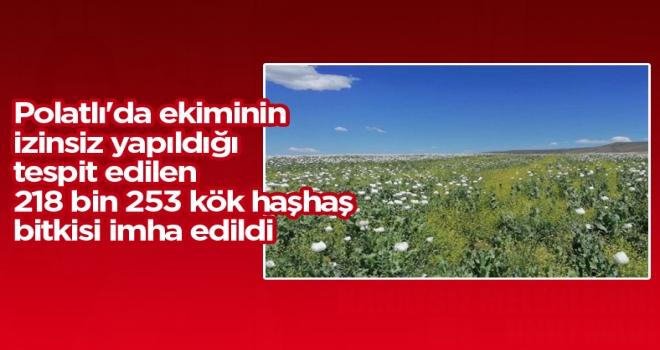 Polatlı'da ekiminin izinsiz yapıldığı tespit edilen 218 bin 253 kök haşhaş bitkisi imha edildi