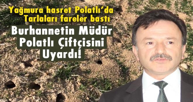Polatlı'da tarlalar farelerin istilasına uğradı!