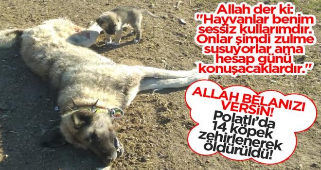 Polatlı'da vahşet! 14 köpek zehirlenerek öldürüldü