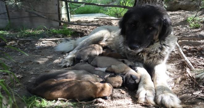 Köpeğe tecavüz iddiası, hayvanseverleri ayağa kaldırdı