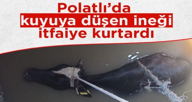 Polatlı'da İnek bir anda kuyuya düştü... İtfaiye ekipleri seferber oldu