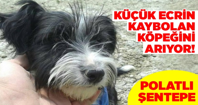 10 yaşındaki Ecrin Nisa Doğan, 7 aylık köpeği Zeytin'i arıyor