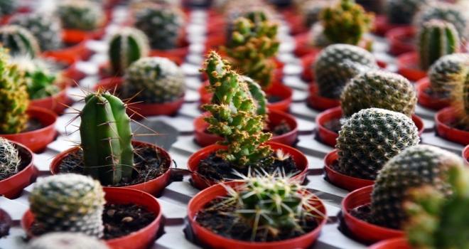 ANFA Bitki Evi Yazı Rengarenk Çiçeklerle Karşılıyor