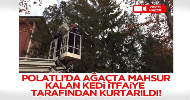 Polatlı'da ağaçta mahsur kalan kedi kurtarıldı!