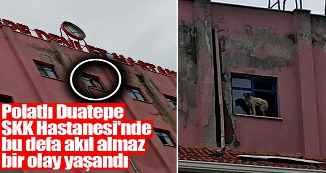 Polatlı'da akıl almaz olay: Bir köpek pencerenin pervazına çıktı!