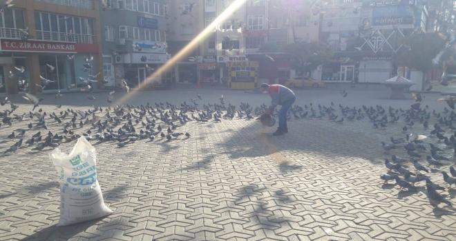 Polatlı Belediyesi Sokak Hayvanlarını Unutmadı